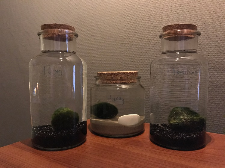 mosbal-wier-alg-plant-organisme