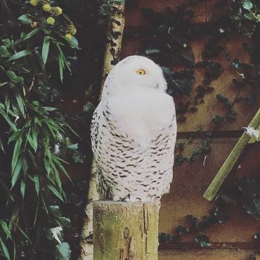 Hedwig <3