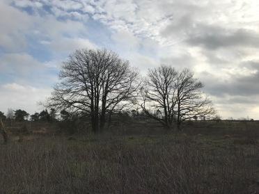 Sallandse heuvels